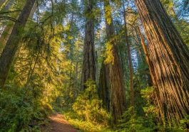 visit the redwoods