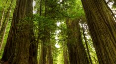 redwood forest vacation