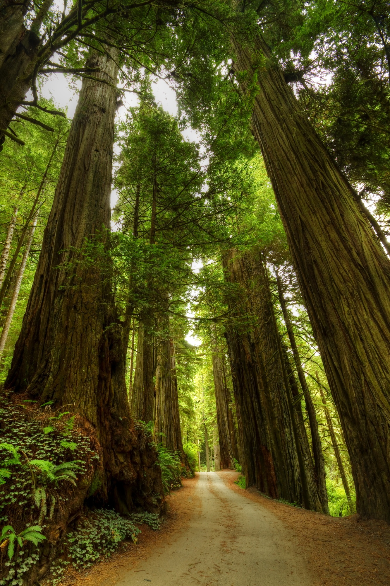 8 Reasons Why You Should Take a Redwood Forest Vacation